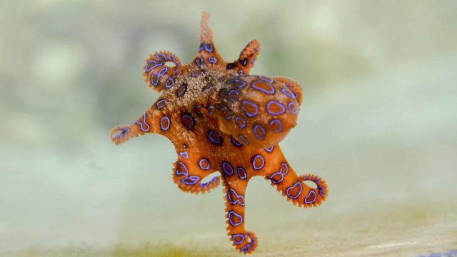 here s what happened when scientists gave octopuses ecstasy wftv