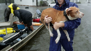 HURRICANE FLORENCE: Good Samaritan who sheltered animals during storm arrested