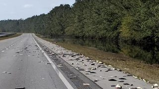 Florence aftermath: Dead fish pile up on North Carolina interstate