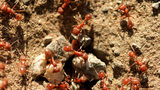 Fire Ant Attack Nearly Kills North Carolina Woman