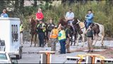 People on horseback joined in the search for the cows missing from a crash on the I-285 ramp to I-75 in Cobb County early Monday. Search and recovery teams followed up on sightings in the area of Chattahoochee River. (JOHN SPINK / JSPINK@AJC.COM)