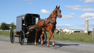 Report: 7 people hurt when Amish buggy rear-ended by car