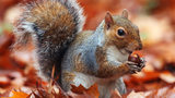 Researchers believe a hunter died of a rare neurological disorder after eating squirrel brains.