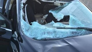 Deer crashes through car windshield in highway accident