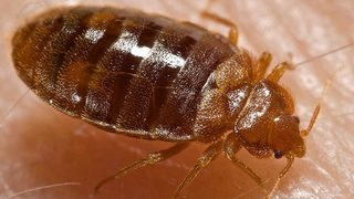 Bedbugs infest offices at South Carolina courthouse; exterminators brought in