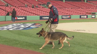 Red Sox head groundskeeper shares his journey to Fenway Park