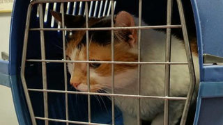 Woman accuses Delta of prioritizing cats over her husband