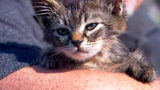 Kitten Found Glued to Road Gets New Home And Name