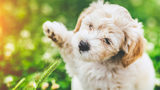 Company Will Pay $100 Per Hour to Pet Puppies