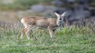 Deer wanders into Fort Worth children