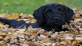 Family dog swallows Michigan woman