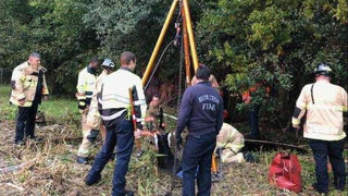 Houston firefighters rescue horse from septic hole