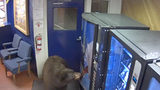 A bear broke into a police station in California.