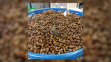 South Carolina Wildlife Rescue Sharing Acorns After Donations For Hundreds of Rescue Squirrels Pour In