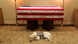 Moving Photo Shows George H.W. Bush's Service Dog Lying Near Casket