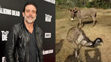 """WATCH: Donkey and Emu With Unlikely Bond Adopted By """"The Walking Dead"""" Star Jeffrey Dean Morgan"""