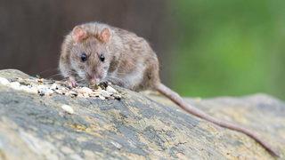 Rat found inside vending machine at Florida high school