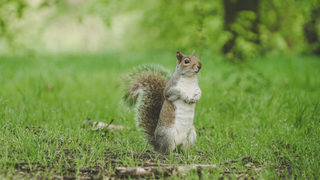 UPS driver plays it cool when squirrel jumps on him