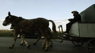 Horses in Minnesota pull tractor-trailer up driveway