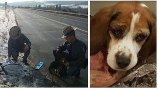 Two dogs thrown out of window on New York interstate