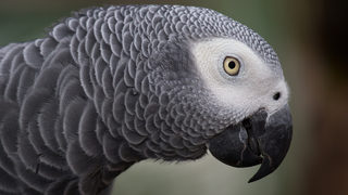 Foul-mouthed parrot uses Amazon Alexa to order things while owner is away