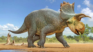 New 11-foot-long, horned dinosaur discovered in southwestern U.S.