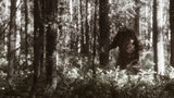 Pennsylvania among the best places to spot Bigfoot