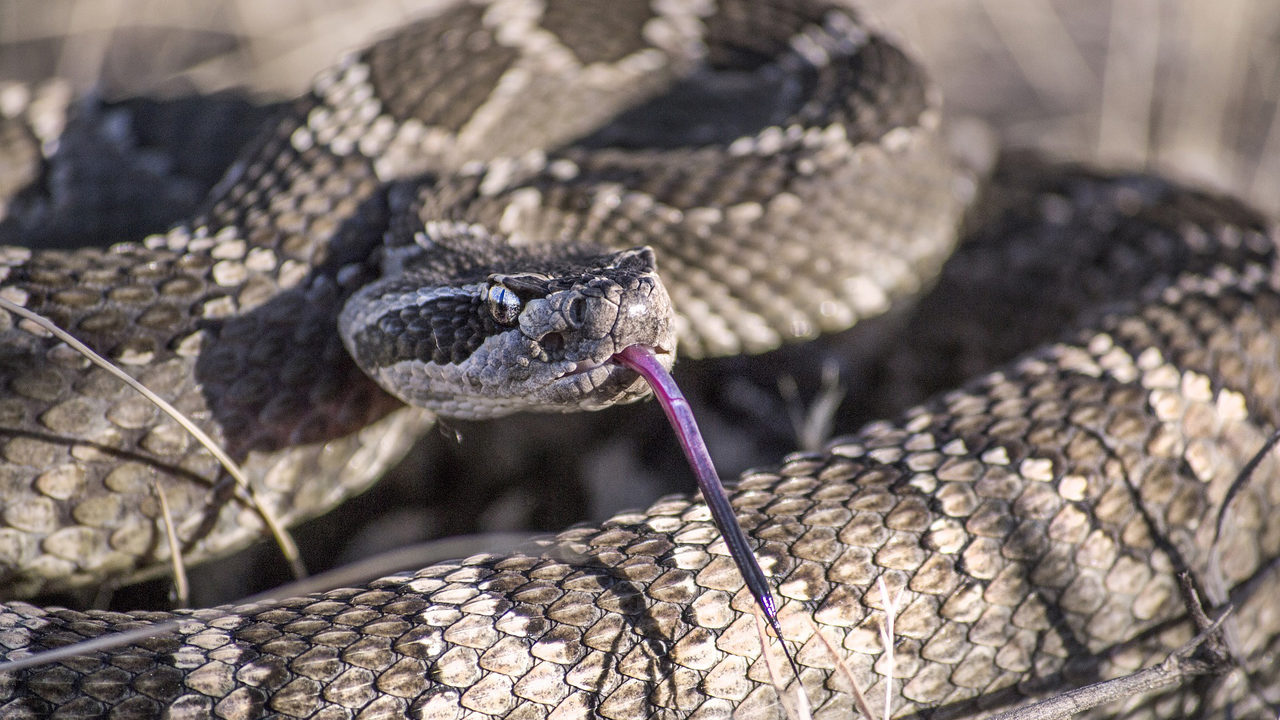 Slithering surprise: Texas man 'freaked out' to find dozens