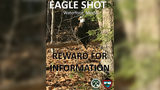 Bald Eagle Killed in Maine, Officials Offering $1,000 Reward for Answers