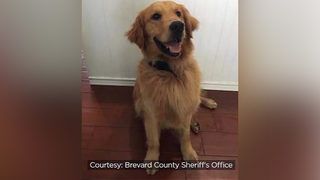 K-9 given Narcan while searching for drugs on EDM festival on cruise ship