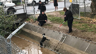 Missing dog reunited with family after canal rescue