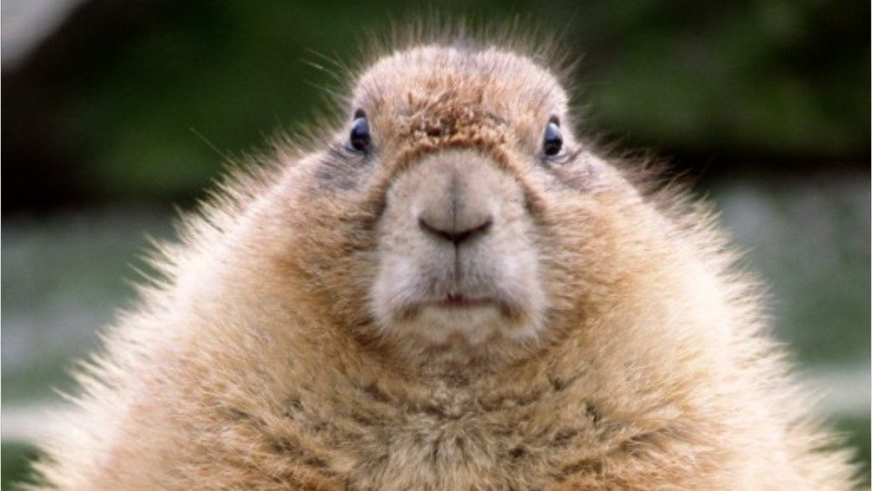 Groundhog Day 2019 6 Things To Know Wsoc Tv