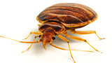 Lawyer with Bed Bugs Falling from Suit Causes Courthouse to Close