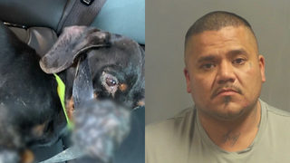 Dog found in ditch with snout, legs bound with duct tape; suspect facing charges (graphic photo)