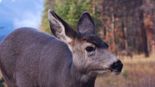 Video shows deer trying to jump through elementary school window