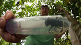 SEE: World's Largest Bee Not Extinct After All