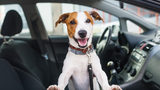 Bill Proposes Dog-Petting While Driving Illegal in Florida