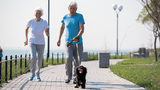 Walking Dogs Sending More Seniors to Emergency Room