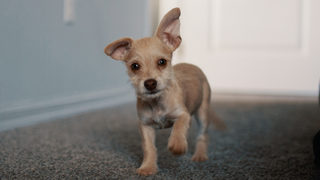 Puppy with broken leg thrown in trash chute, left for days in dumpster