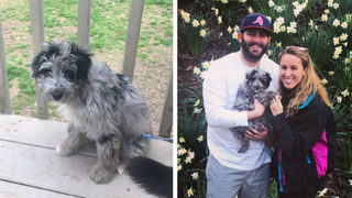 Couple warning others about Rover pet sitting app after they say puppy died