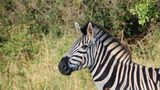 A zebra was shot and killed after it escaped from a North Florida property Wednesday.