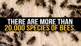 7 Fun Facts About Bees