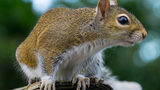 Animal Control Worker Rescues Family of Baby Squirrels