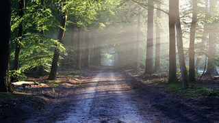 A little dose of nature can drastically reduce stress, here