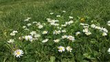 Meteorological Spring and Astronomical Spring – What's the Difference?