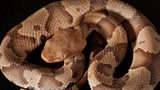 A bite from a copperhead snake sent a Texas girl to the hospital Monday.