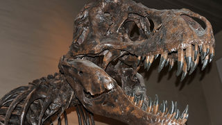 Baby T. Rex Skeleton for Sale on eBay, Scientists are Furious
