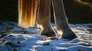 Dogs attack horse, leaving it severely injured