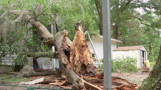 Baby hurt when oak tree falls on Florida home