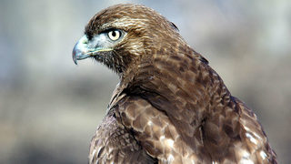 Man sentenced to 90 days in jail after killing 159 protected birds of prey